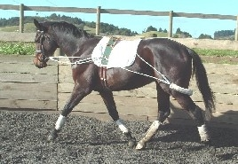 EURO TRAINING SYSTEM LX-lunging-Spurs