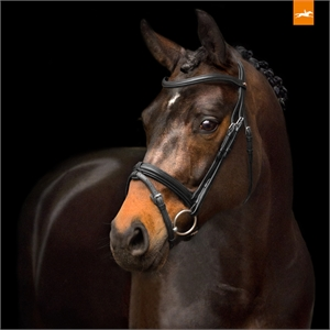 SCHOCKEMOHLE TOKYO SELECT SNAFFLE BRIDLE -bridles & bits-Spurs